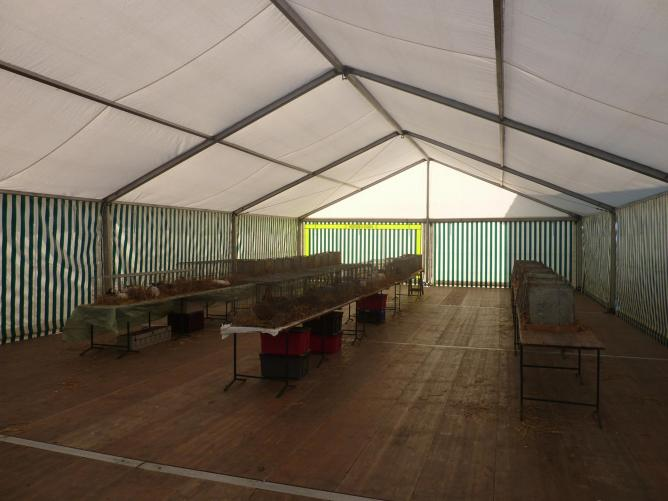 tables et cages installées